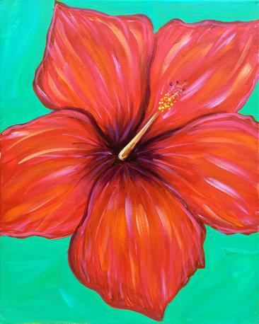 Hibiscus Rosa