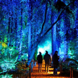 The latest night lit and black light activities you'll want to check out