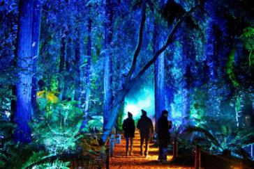 Blacklight and Night Lit Activities