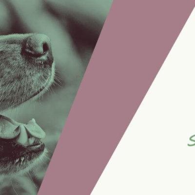 Calling All Riverside and San Bernardino County Animal Loving Artists!